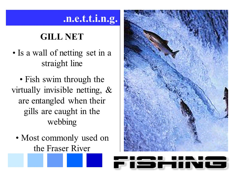 .n.e.t.t.i.n.g. GILL NET. Is a wall of netting set in a straight line.