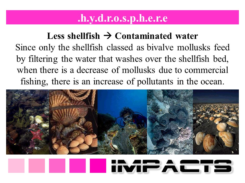Less shellfish  Contaminated water