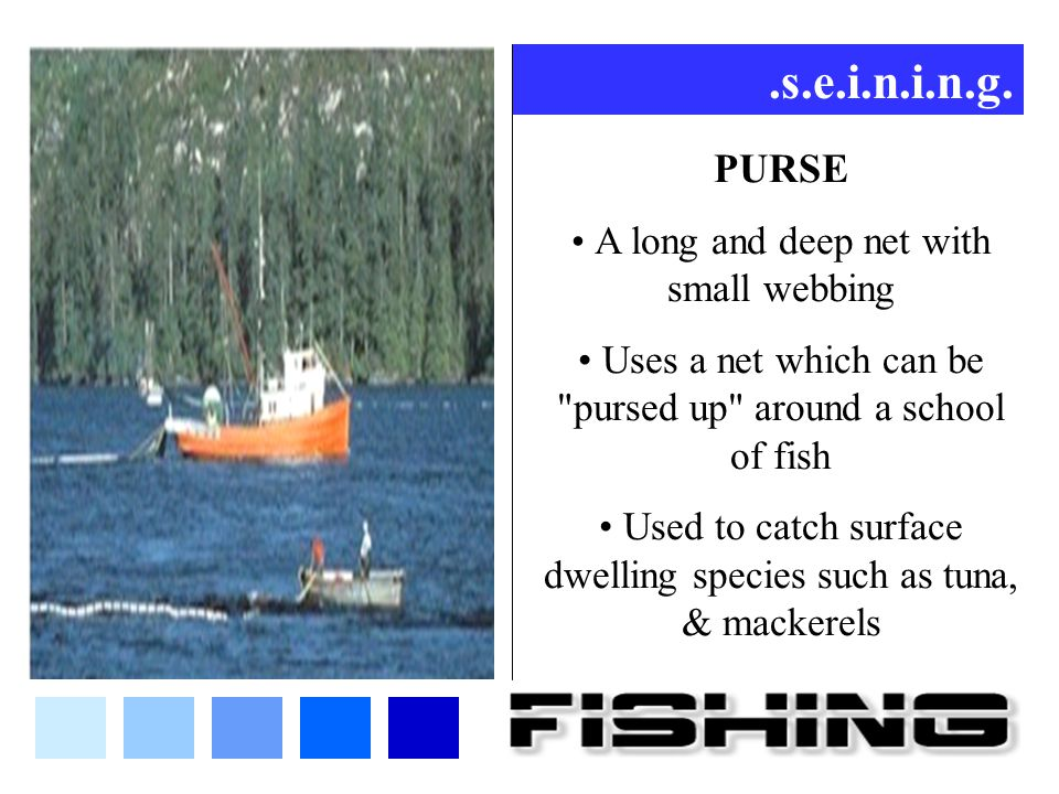 .s.e.i.n.i.n.g. PURSE. A long and deep net with small webbing. Uses a net which can be pursed up around a school of fish.