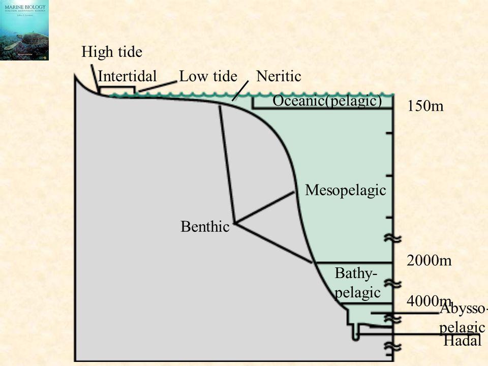 High tide Intertidal. Low tide. Neritic. Oceanic(pelagic) 150m. Mesopelagic. Benthic. 2000m.