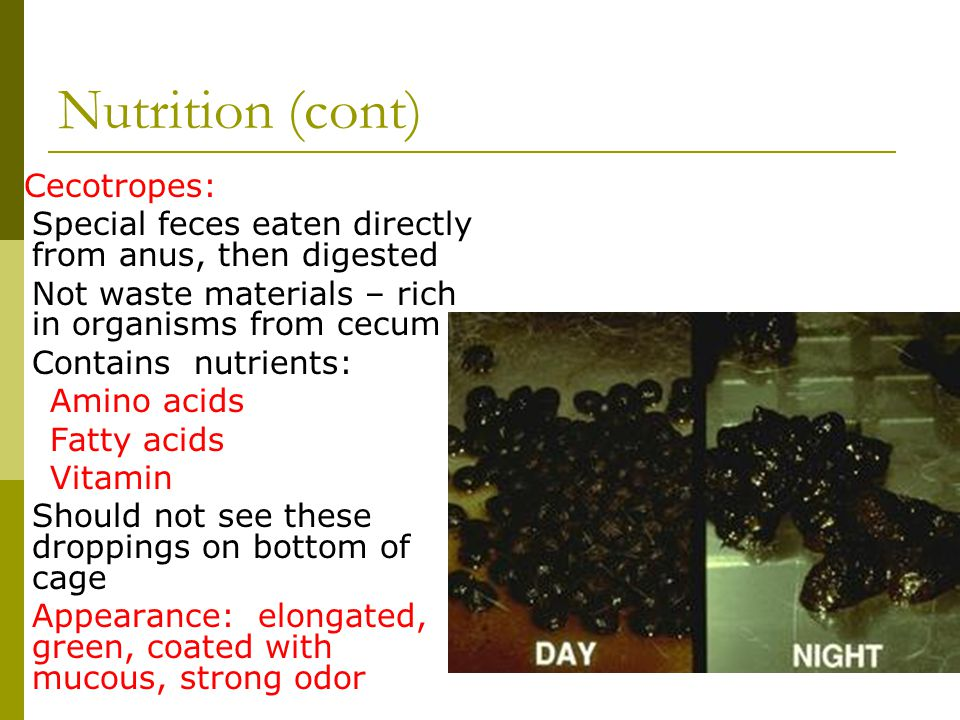 Nutrition (cont) Cecotropes: