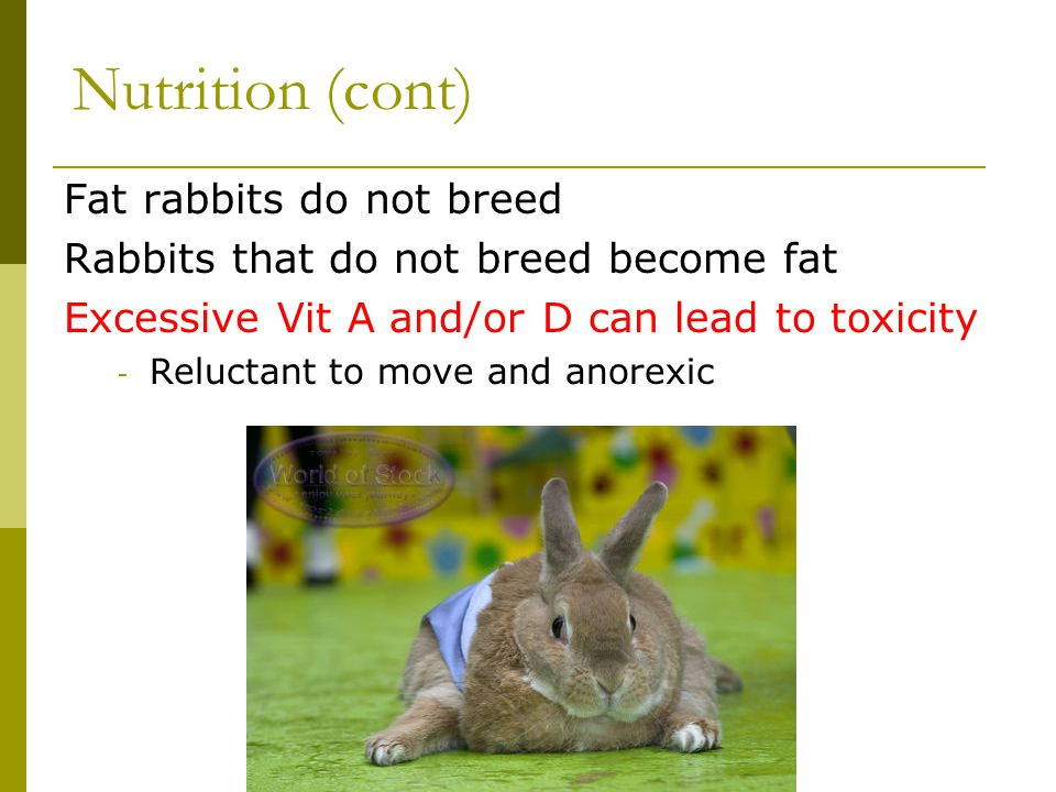 Nutrition (cont) Fat rabbits do not breed