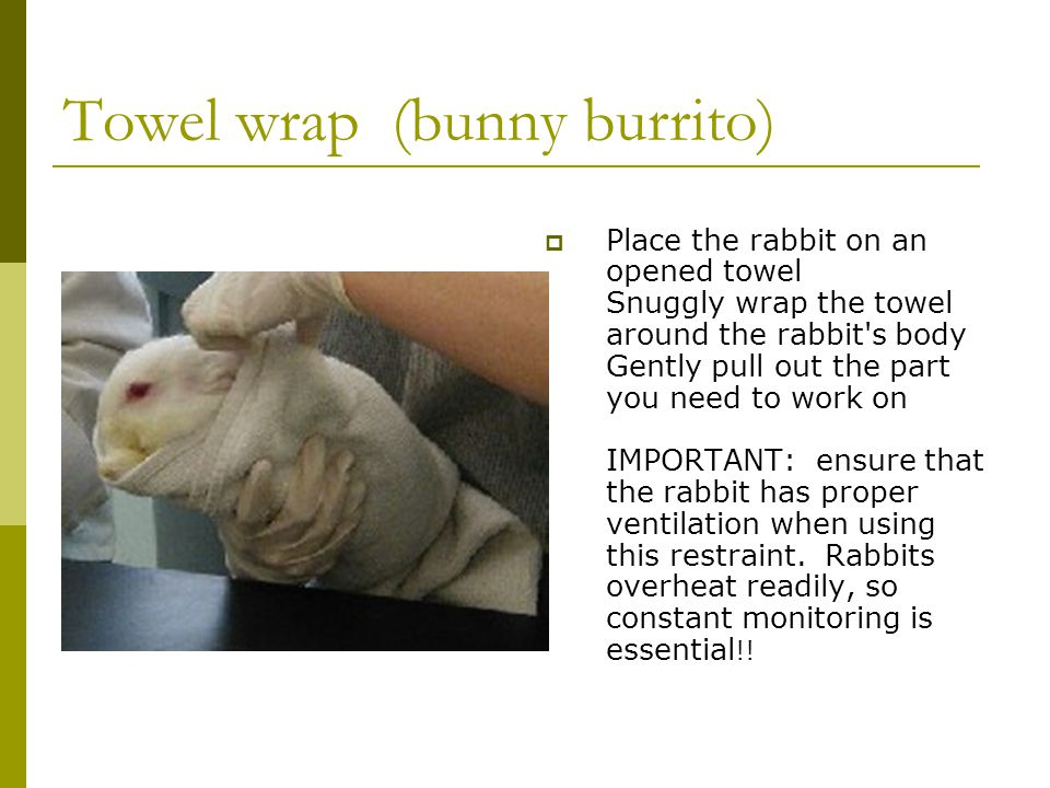 Towel wrap (bunny burrito)