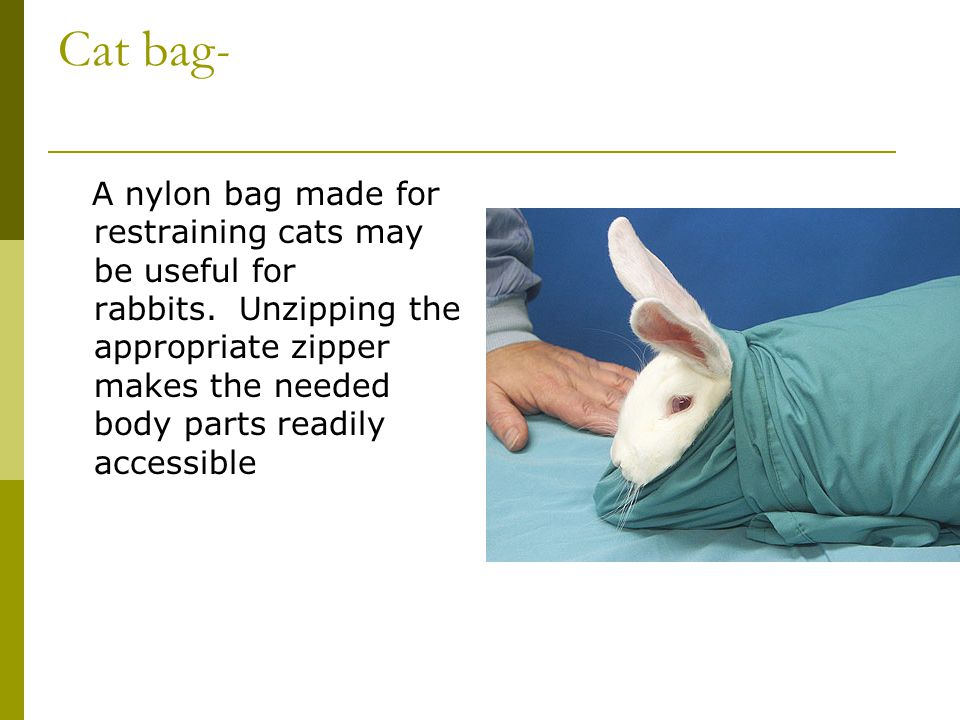 Cat bag-