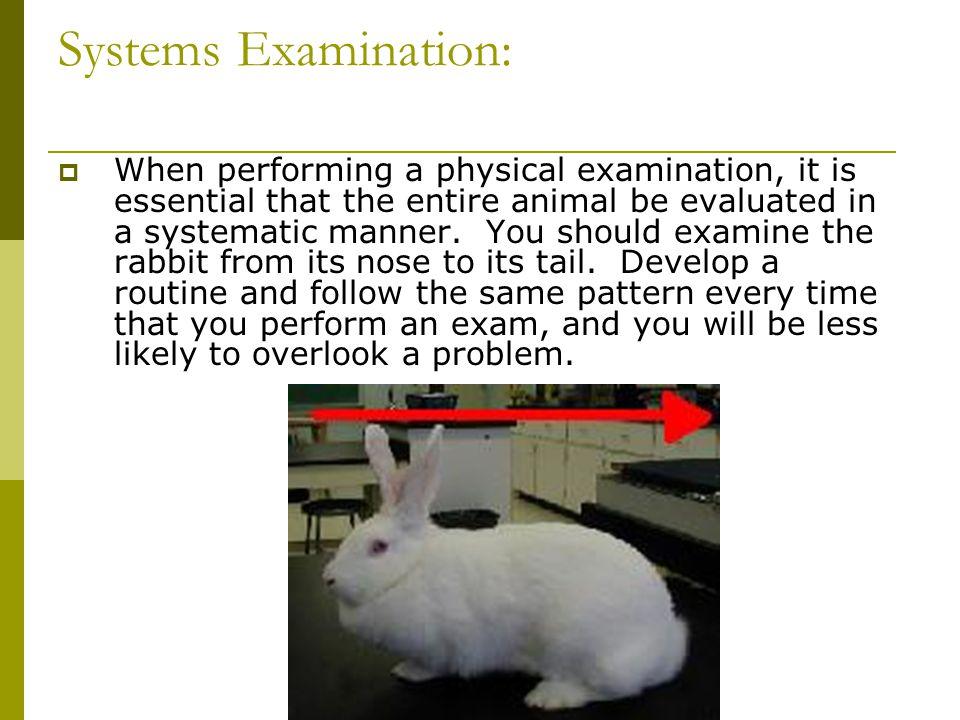 Systems Examination:
