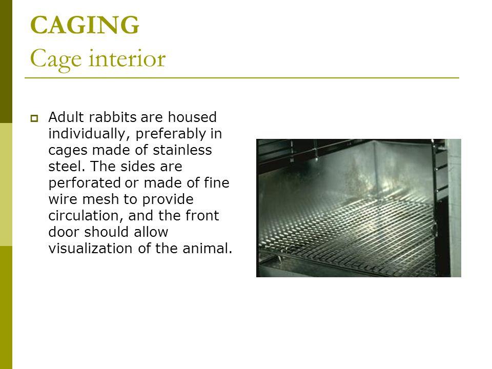 CAGING Cage interior