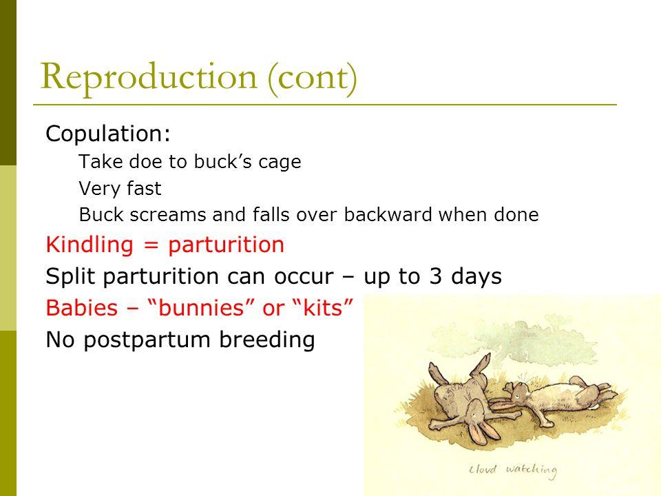 Reproduction (cont) Copulation: Kindling = parturition