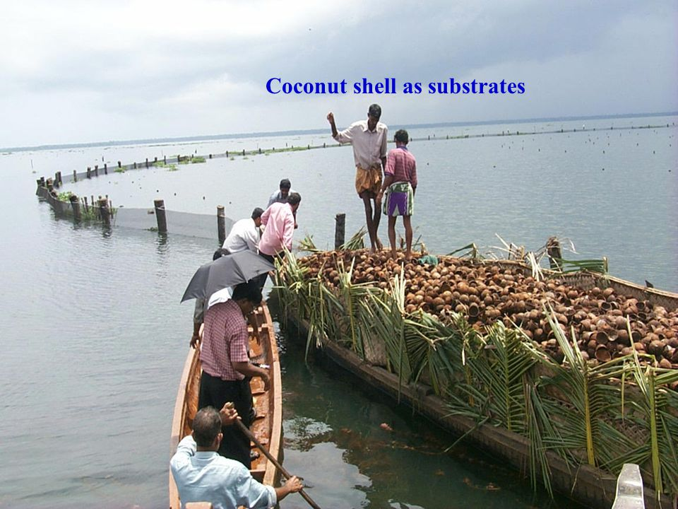 Coconut shell as substrates