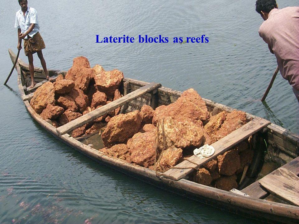 Laterite blocks as reefs