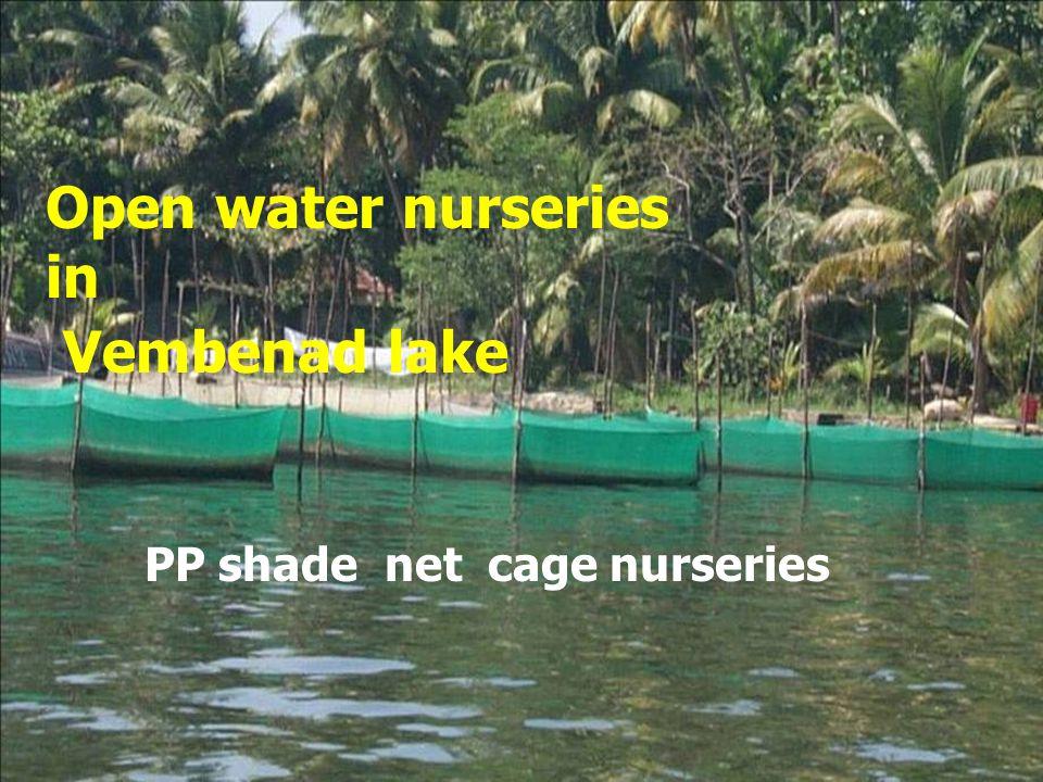 Open water nurseries in Vembenad lake