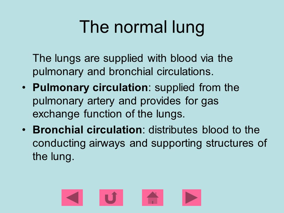 The normal lung The lungs are supplied with blood via the pulmonary and bronchial circulations.