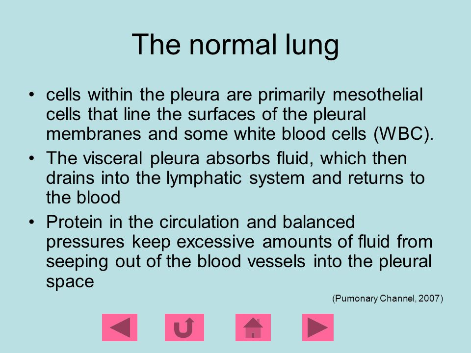 The normal lung