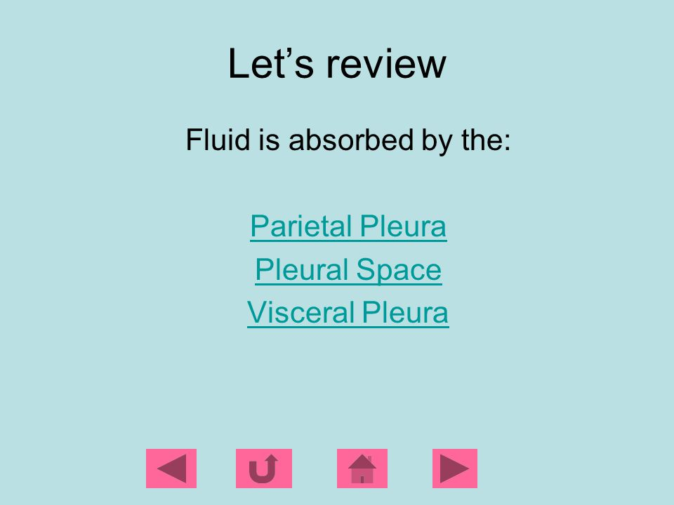 Fluid is absorbed by the: