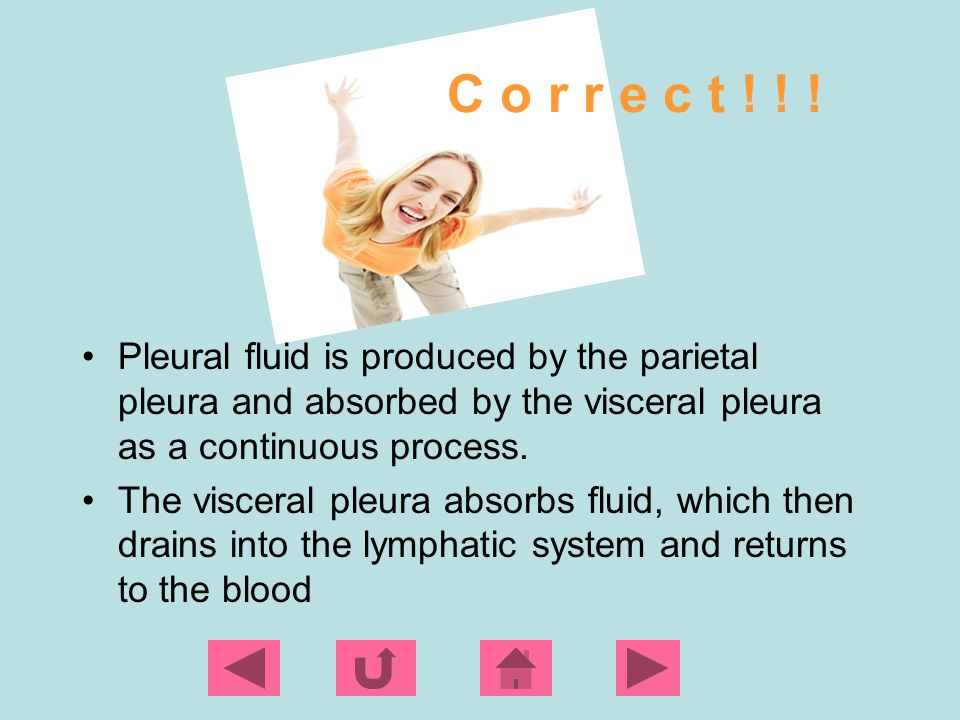 C o r r e c t ! ! ! Pleural fluid is produced by the parietal pleura and absorbed by the visceral pleura as a continuous process.