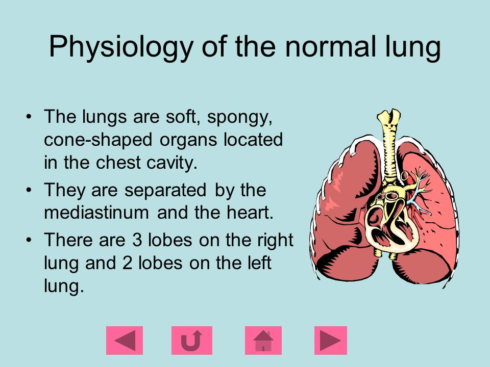 Physiology of the normal lung