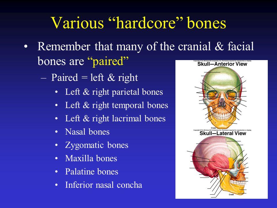 Various hardcore bones