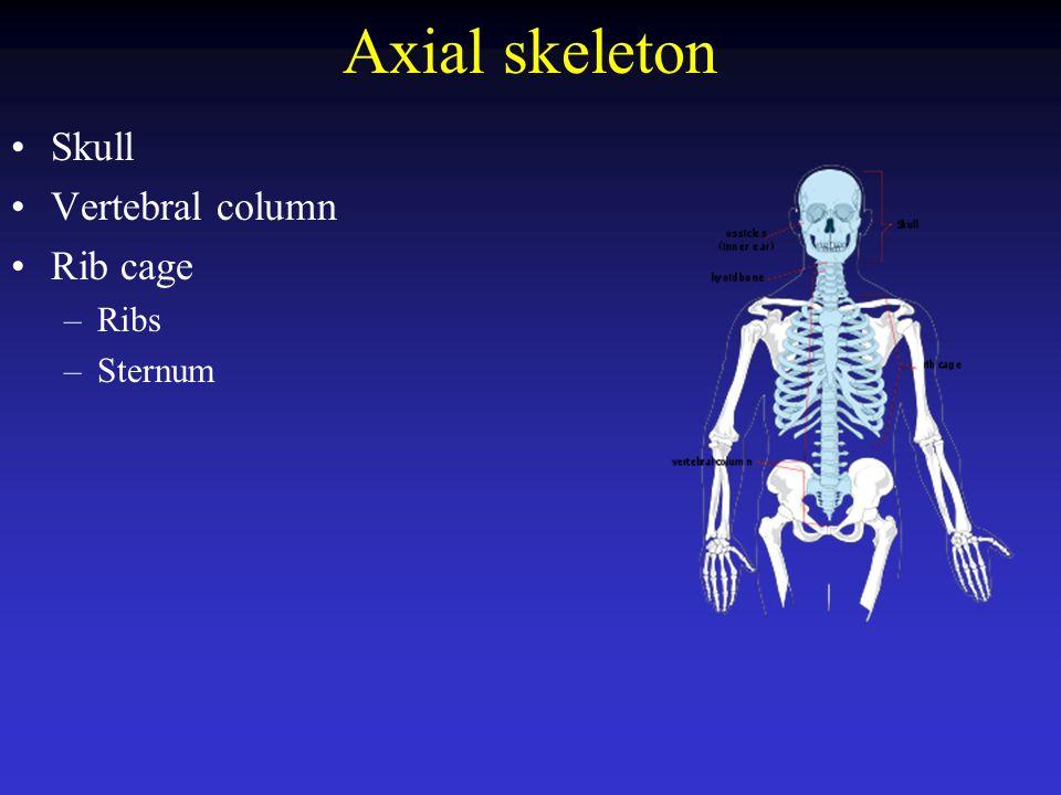 Axial skeleton Skull Vertebral column Rib cage Ribs Sternum