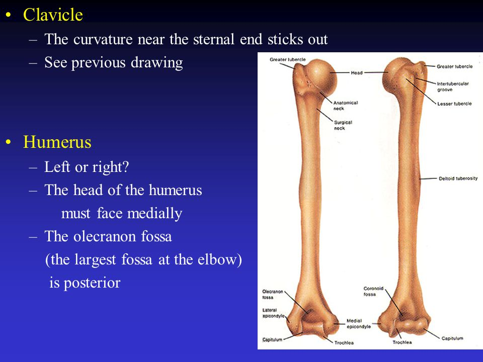 The Skeletal System. - ppt video online download