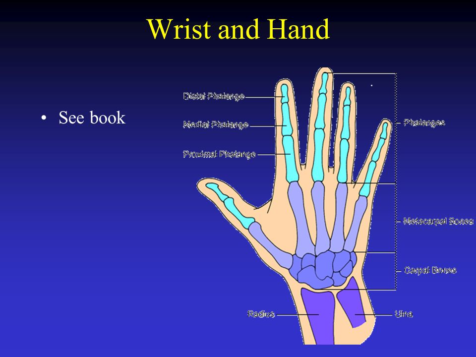 Wrist and Hand See book