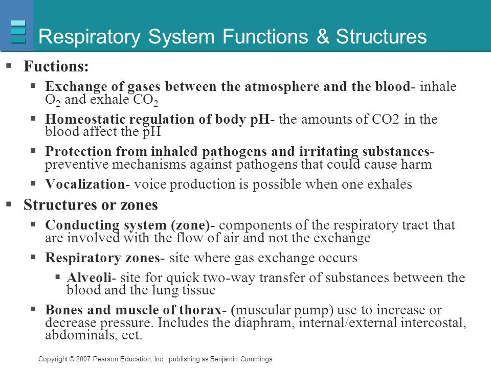 Respiratory System Functions & Structures