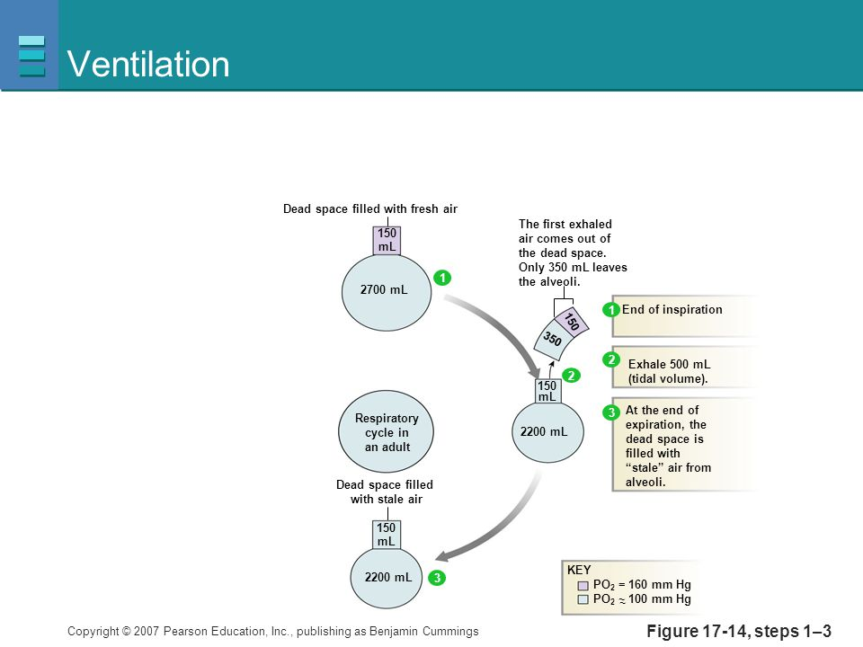 Ventilation Figure 17-14, steps 1–3 150 mL 2700 mL 2200 mL
