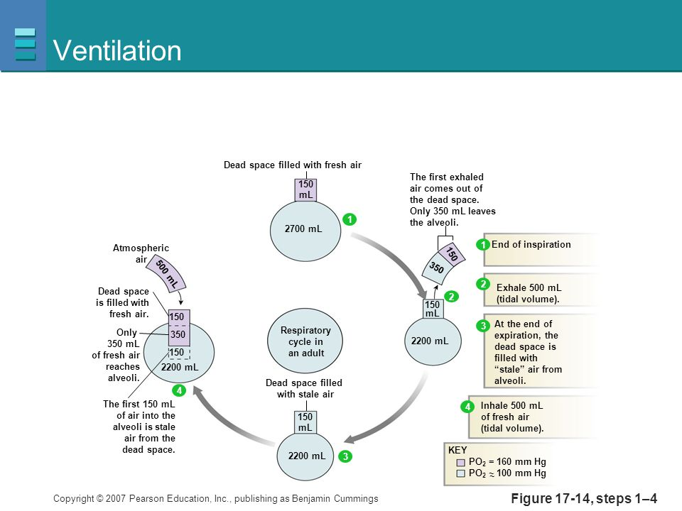 Ventilation Figure 17-14, steps 1–4 150 mL 350 2700 mL 2200 mL