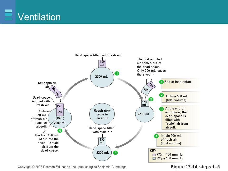 Ventilation Figure 17-14, steps 1–5 150 mL 350 2700 mL 2200 mL