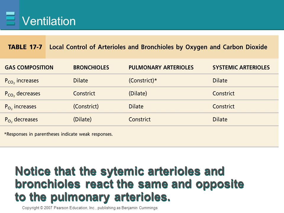 Ventilation Notice that the sytemic arterioles and bronchioles react the same and opposite to the pulmonary arterioles.