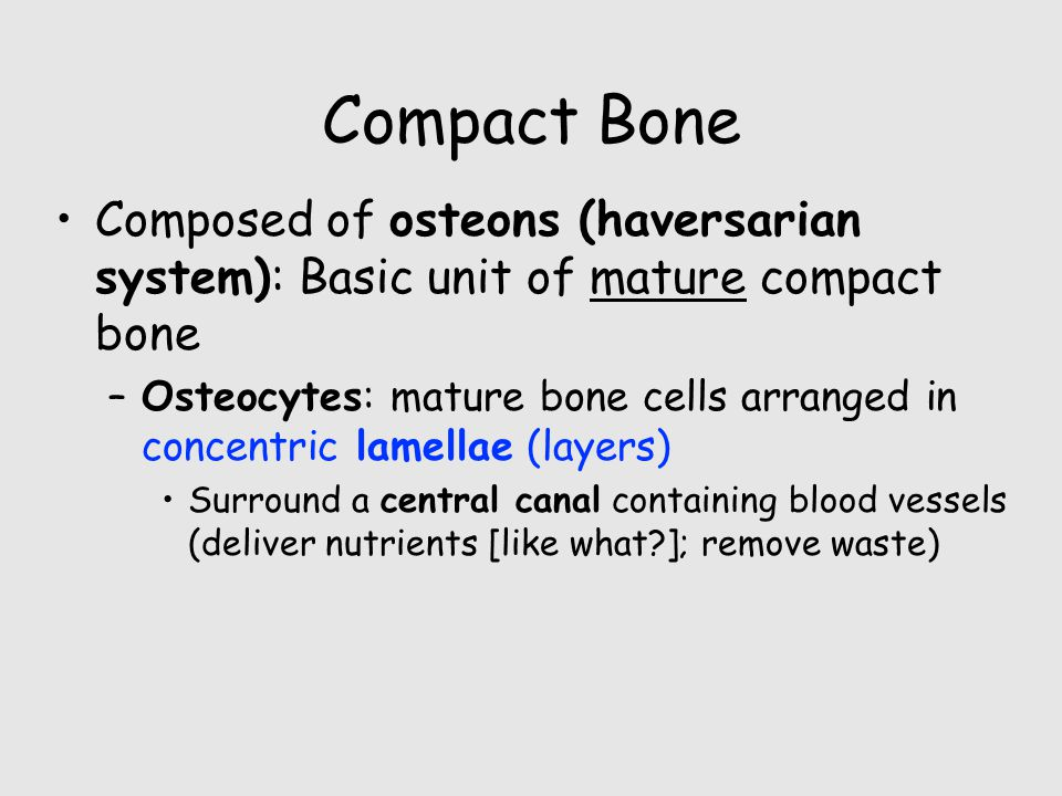 Compact Bone Composed of osteons (haversarian system): Basic unit of mature compact bone.