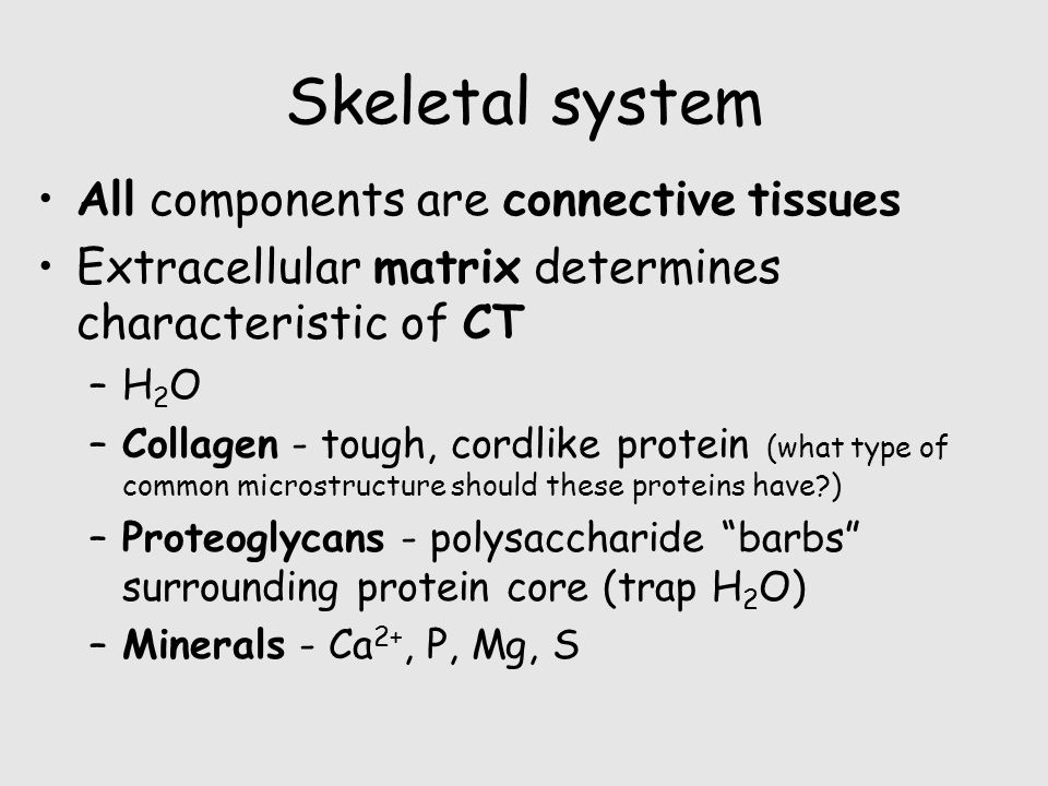 Skeletal system All components are connective tissues