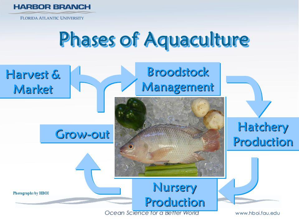 Phases of Aquaculture Broodstock Management Harvest & Market Hatchery