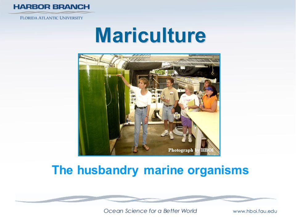 The husbandry marine organisms