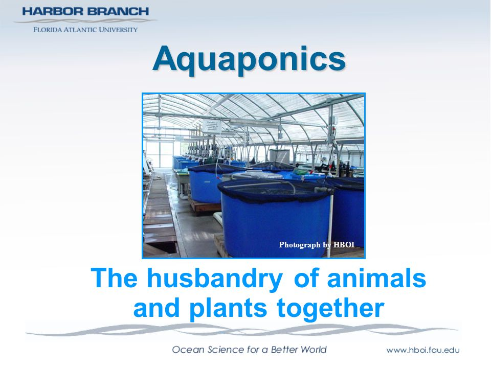 The husbandry of animals and plants together