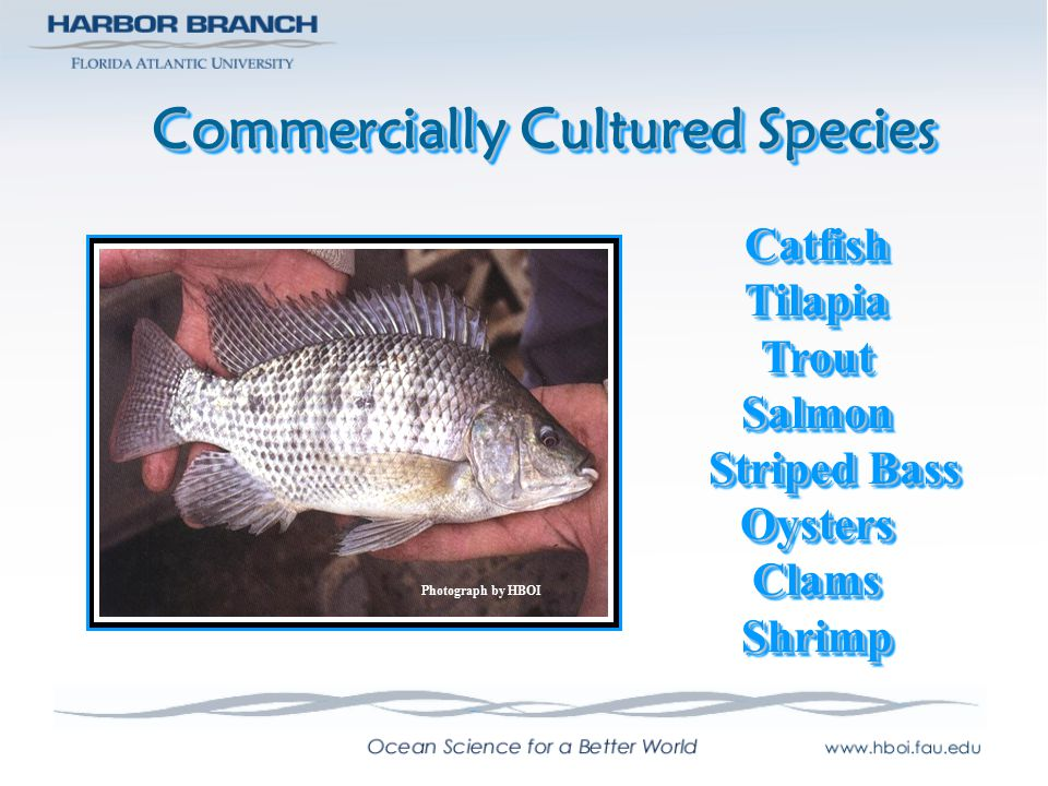 Commercially Cultured Species
