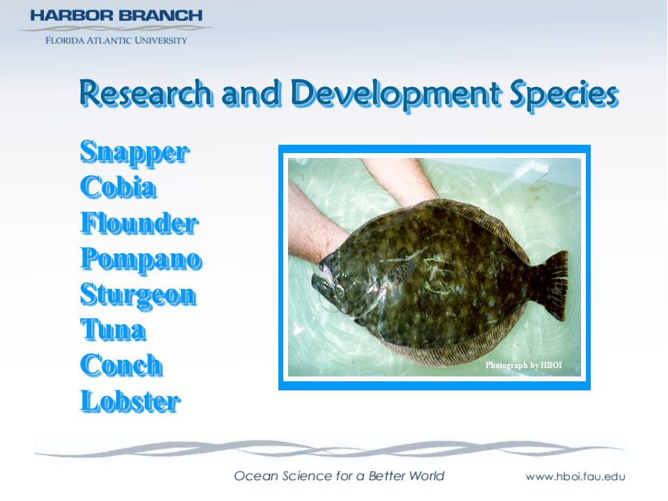 Research and Development Species