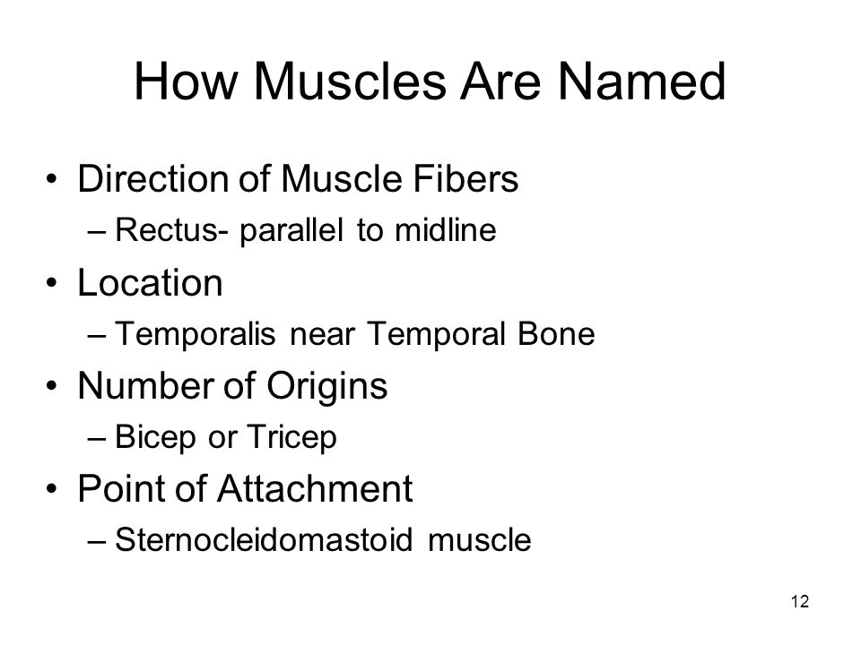 How Muscles Are Named Direction of Muscle Fibers Location
