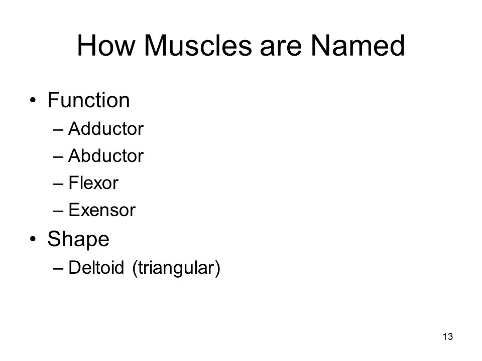How Muscles are Named Function Shape Adductor Abductor Flexor Exensor