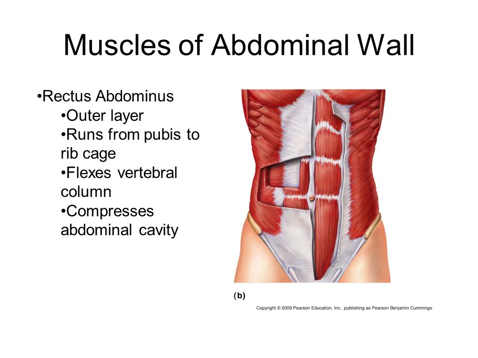 Muscles of Abdominal Wall