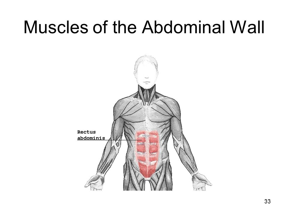 Muscles of the Abdominal Wall