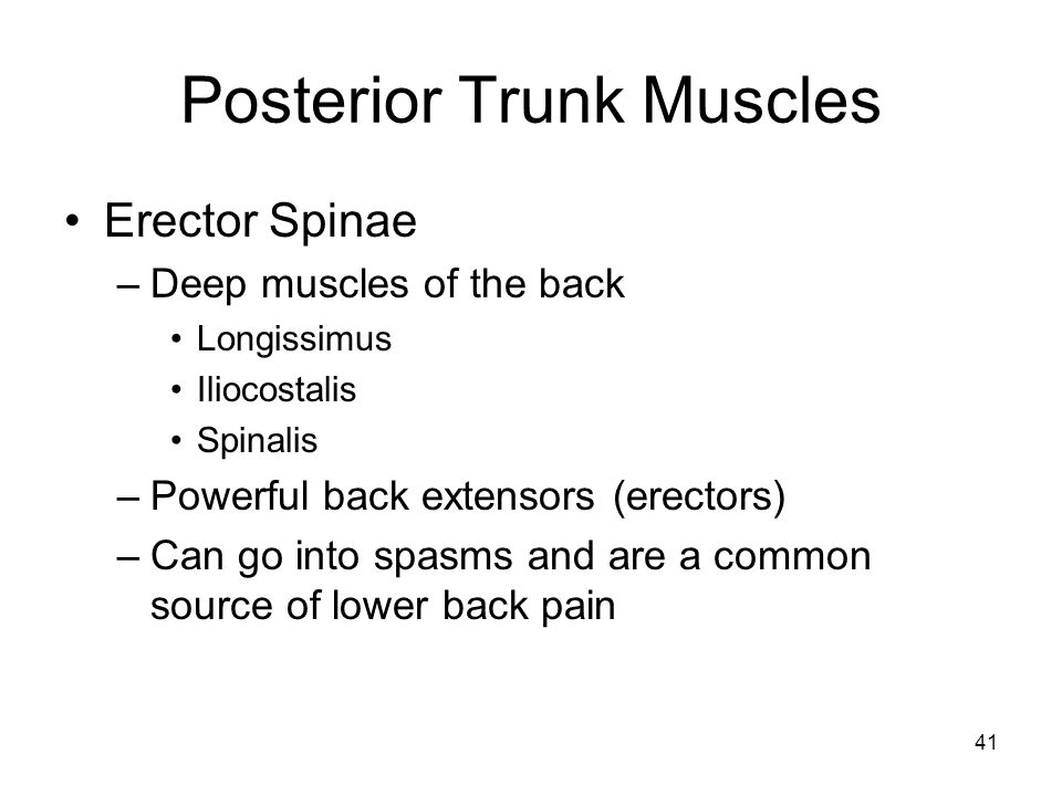 Posterior Trunk Muscles