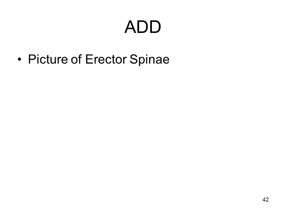 ADD Picture of Erector Spinae