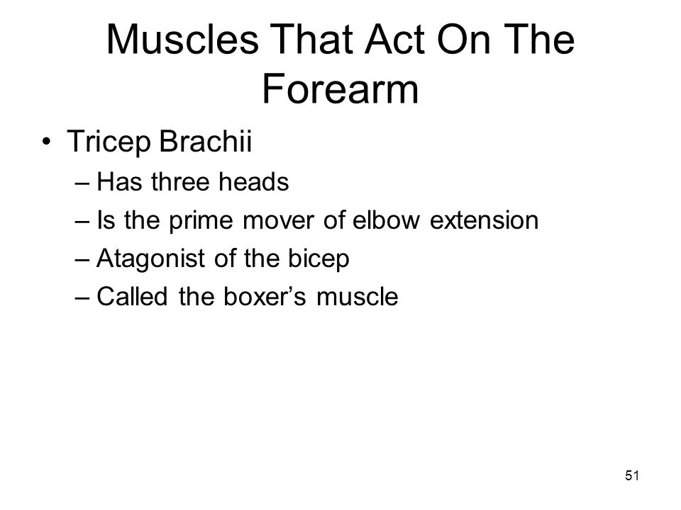 Muscles That Act On The Forearm