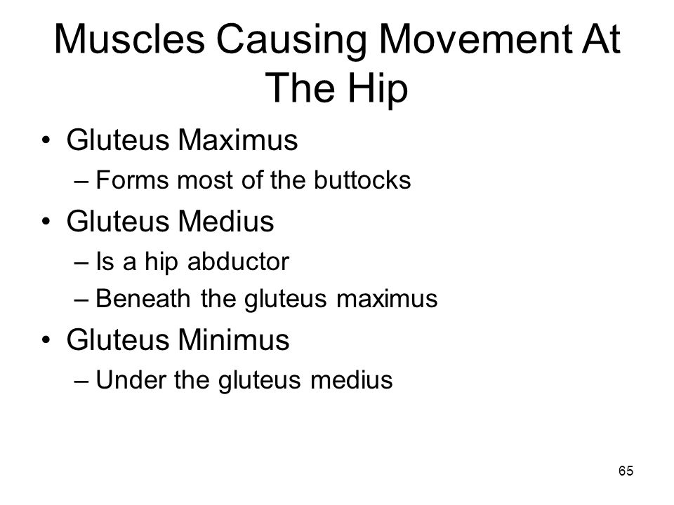 Muscles Causing Movement At The Hip