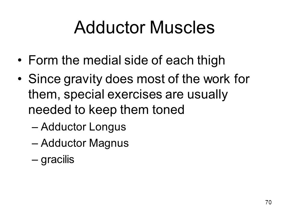 Adductor Muscles Form the medial side of each thigh