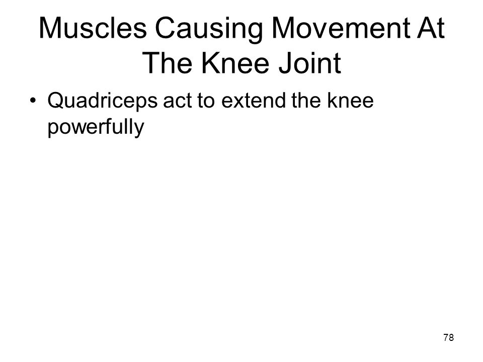 Muscles Causing Movement At The Knee Joint