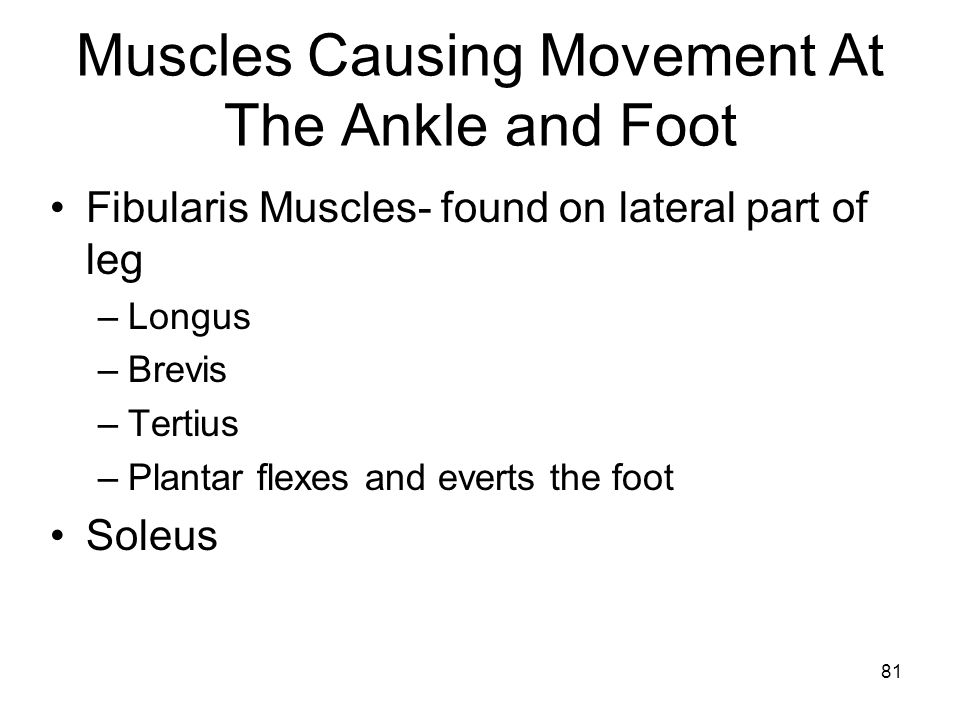 Muscles Causing Movement At The Ankle and Foot
