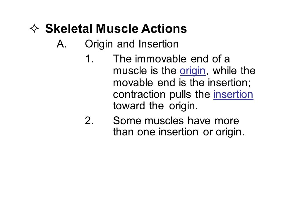  Skeletal Muscle Actions