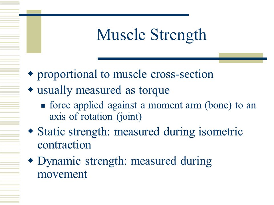 Muscle Strength proportional to muscle cross-section