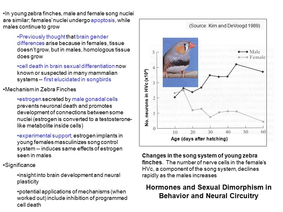 Hormones and Sexual Dimorphism in Behavior and Neural Circuitry