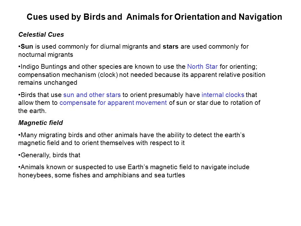 Cues used by Birds and Animals for Orientation and Navigation